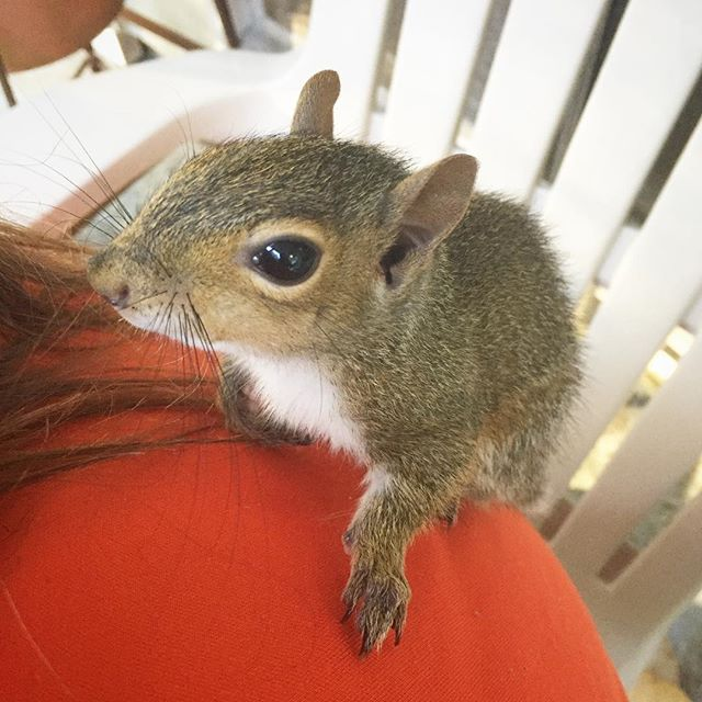 Our little guy is getting big. He does big boy things like sleep outside now but he still comes home for meals and to do laundry. #squirrellife #squirrelmom . . . #entrepreneur #entrepreneurlife #smallbusinessowner #smallbusinesslife #worklife #businesspassion #girlboss #worklifebalance #entrepreneurship #simplify #branding #marketing #operationsmarketing #smallbusiness #smallbiz #smallbusinesslove #smallbusinessmarketing #businesswoman #ladyboss #fempreneur #ceolife #bschool #creativeentrepeneur #onlinebusiness #businessinspiration #womeninbusiness