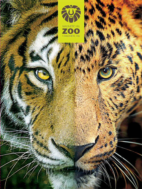 Friends of the Magnetic Hill Zoo 'Big Cats Campaign' - Folder cover