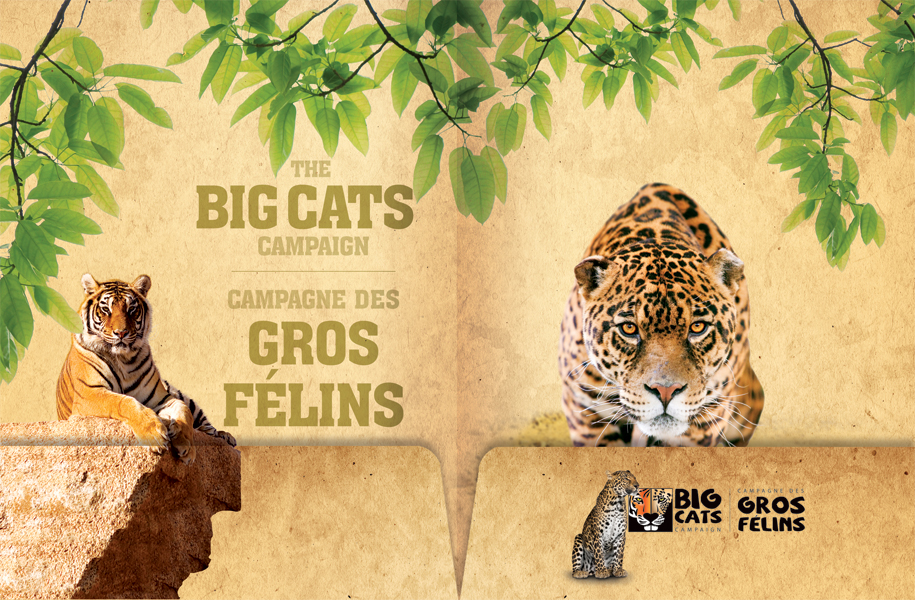 Friends of the Magnetic Hill Zoo 'Big Cats Campaign' - Folder inside spread