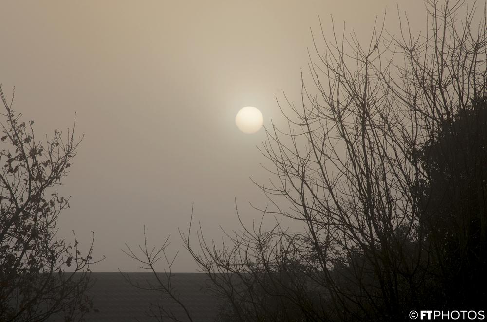 foggy (1).jpg