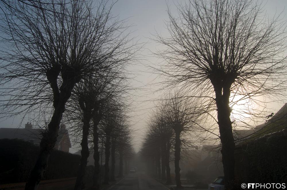 foggy (8).jpg