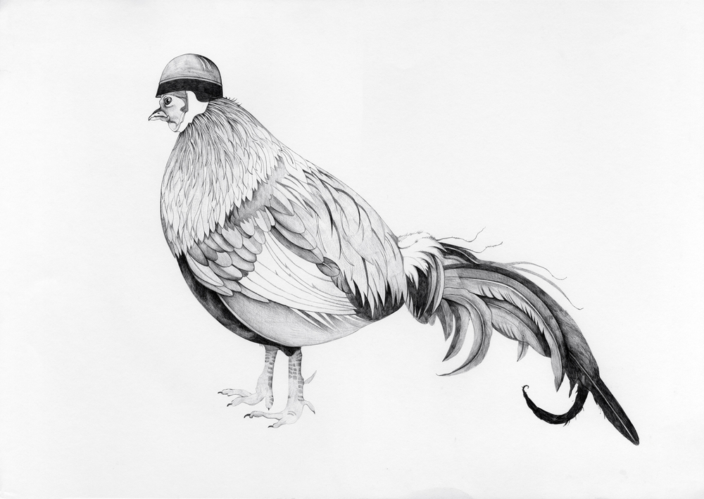 Canonball Cockerel
