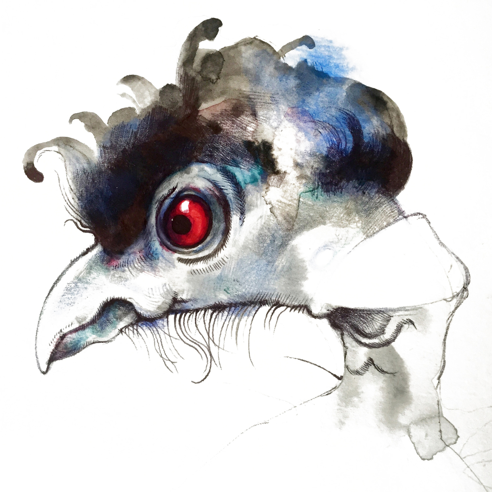 Disgruntled guinea fowl from my new book, still in progress, called The Book of Ruffled Feathers.