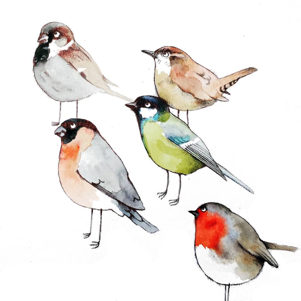Book illustration of garden birds