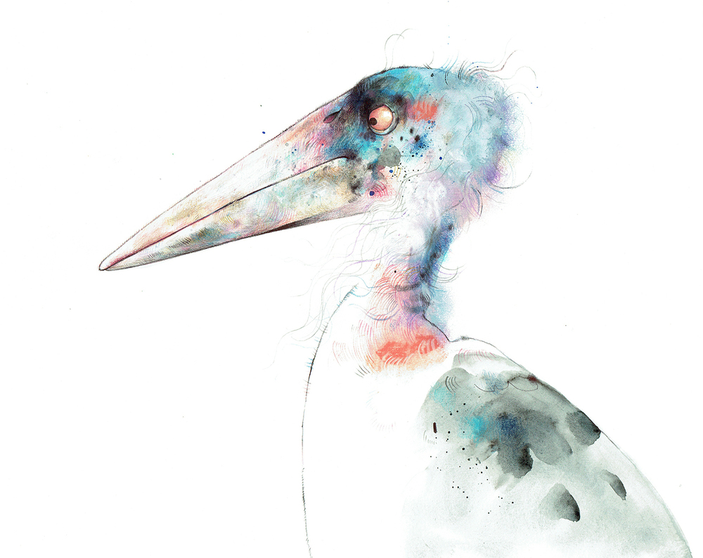 Marabou stork for my book