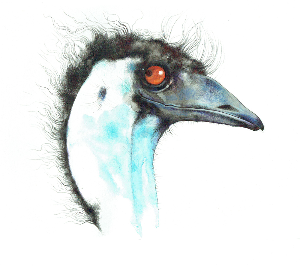 Emu - private commission for client in Australia