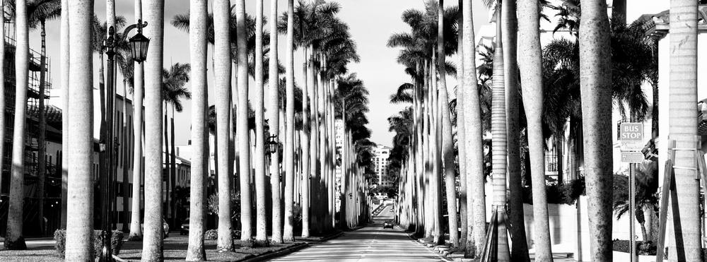 palm_beach_street.jpg