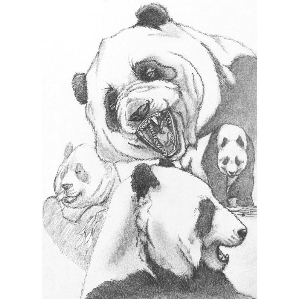 Panda Sketches -