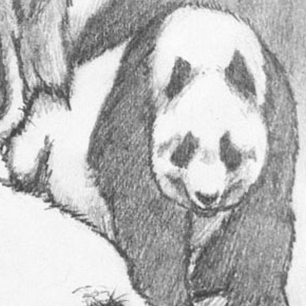 pandaSketch-group-02.jpg