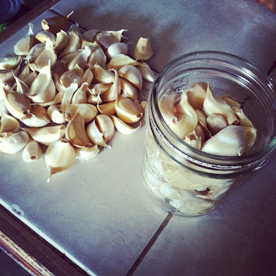 pickling garlic.JPG