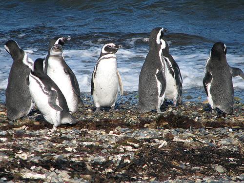 Patagonia - Penguins - Preserve.jpg