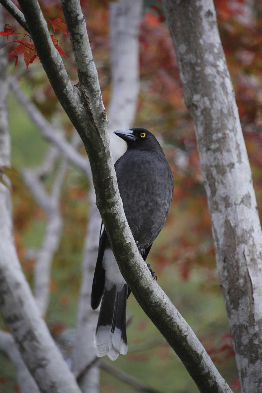bird2.jpg