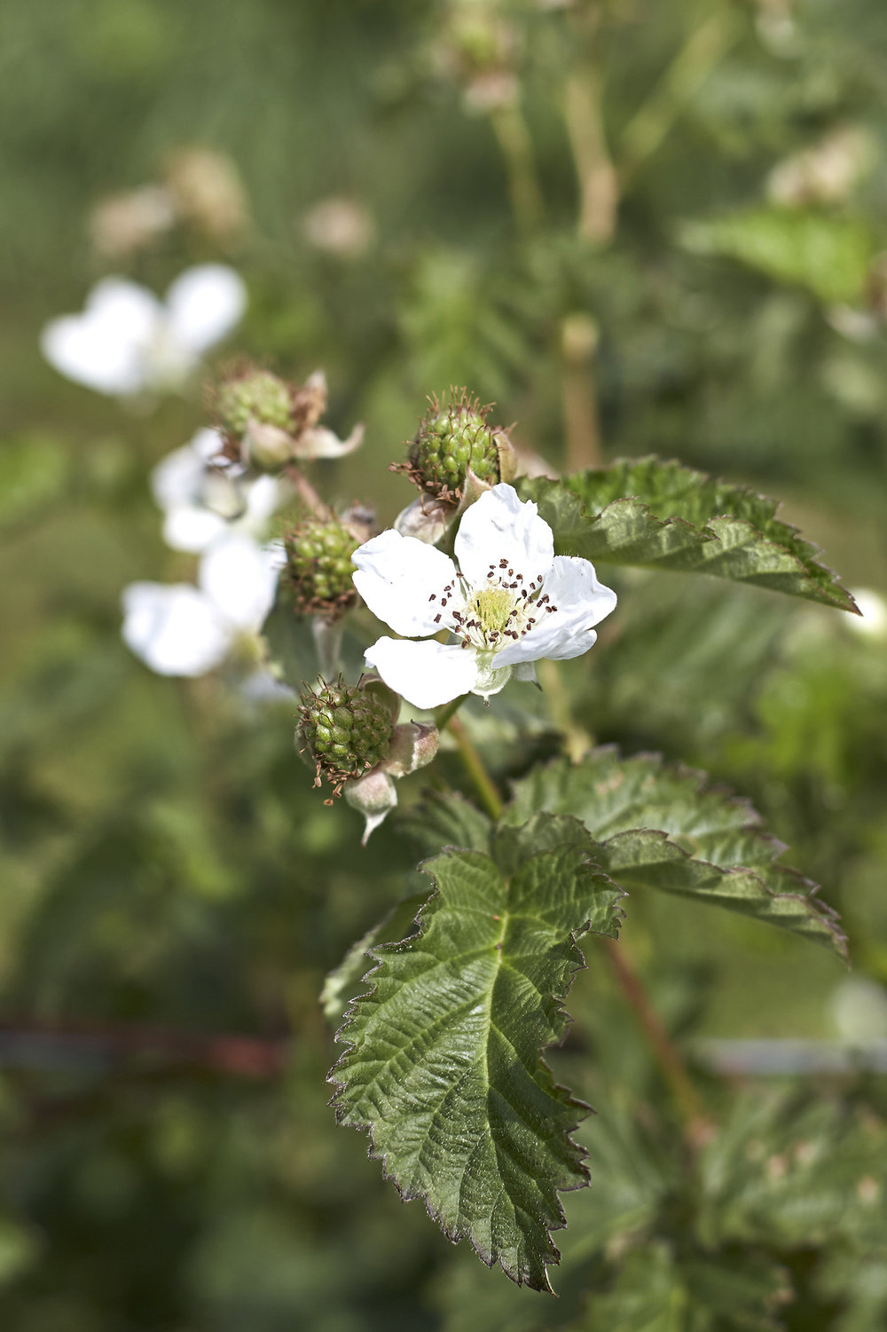 berries flower.jpg