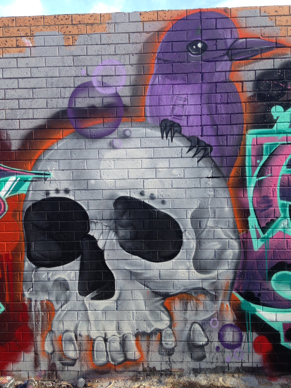 sugarskull,collingwood.jpg
