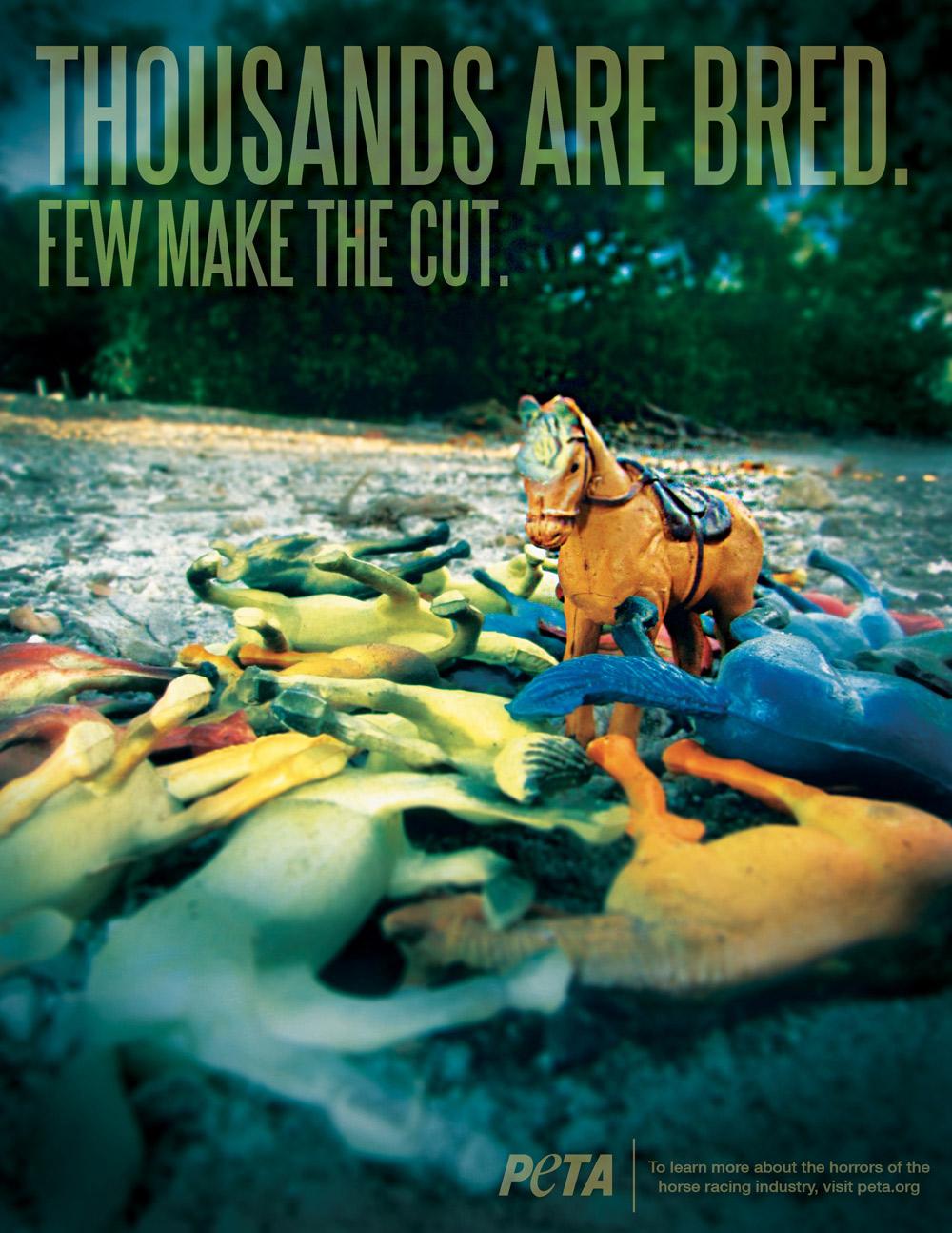 PETA_Horses_2.jpg