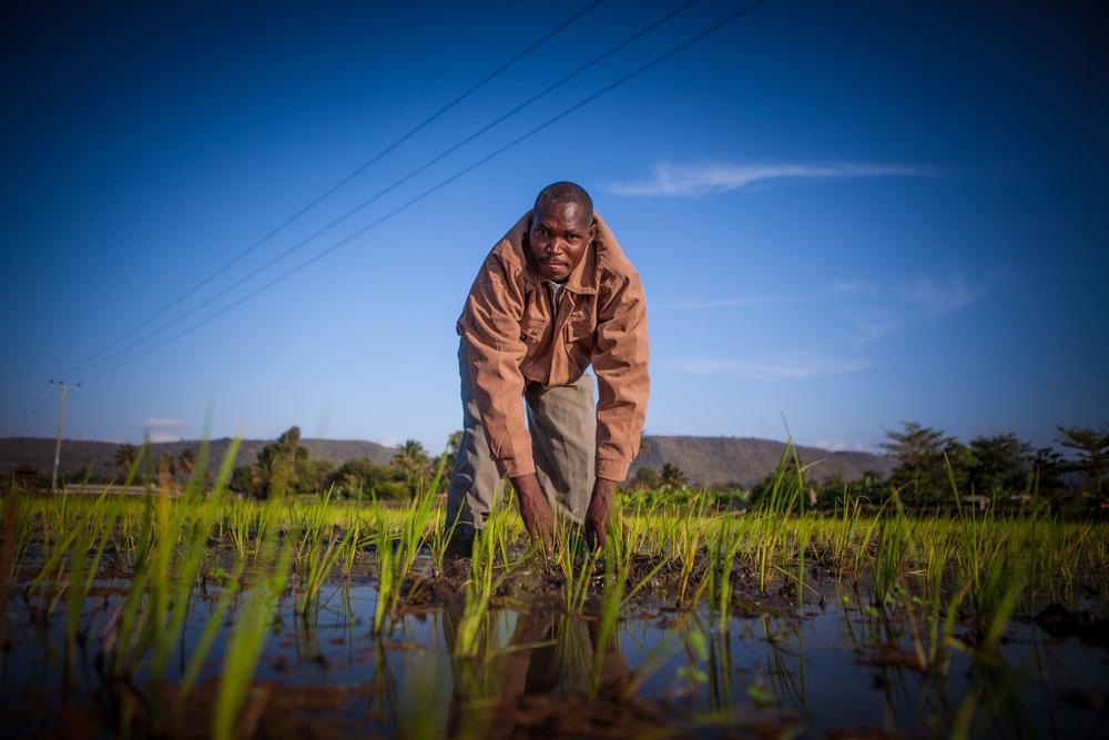 CNFA- Rice Field
