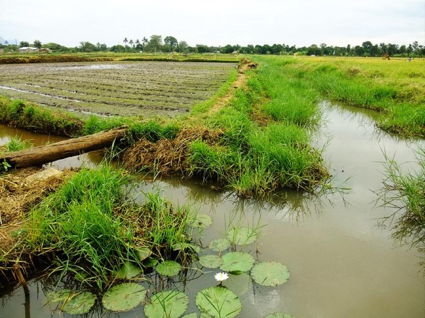 Farm irrigation in Mto Wa Mbu, Tanzania c. Lecucurbitacee