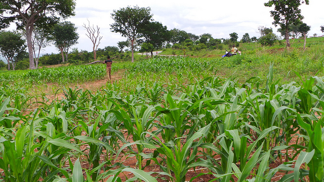 c. Dr Kofi Boa/Center for No-Till Agriculture in Ghana
