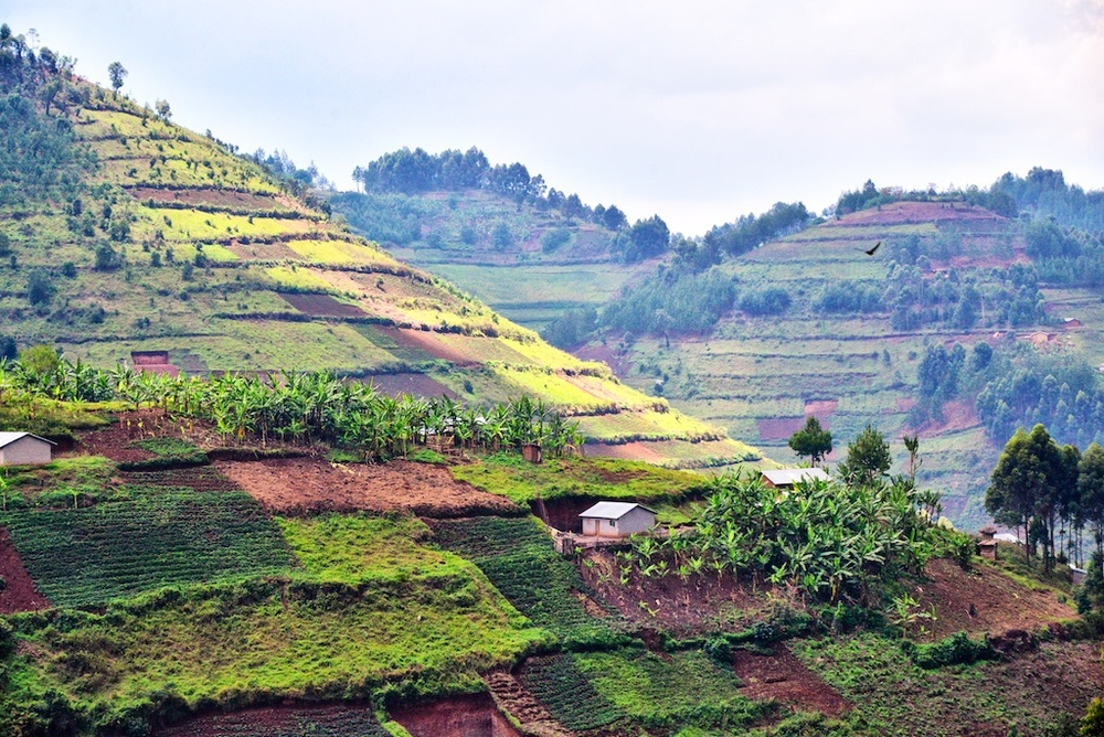 Terrace farming, Uganda c. Rod Waddington/Flickr