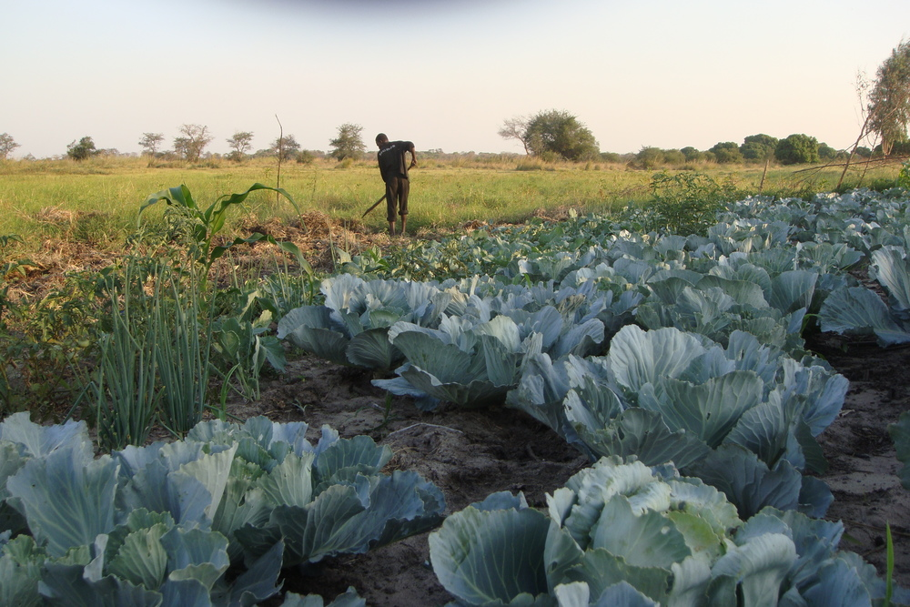 Smallholder farming, Zambia c. Surendran Rajaratnam/FLICKR