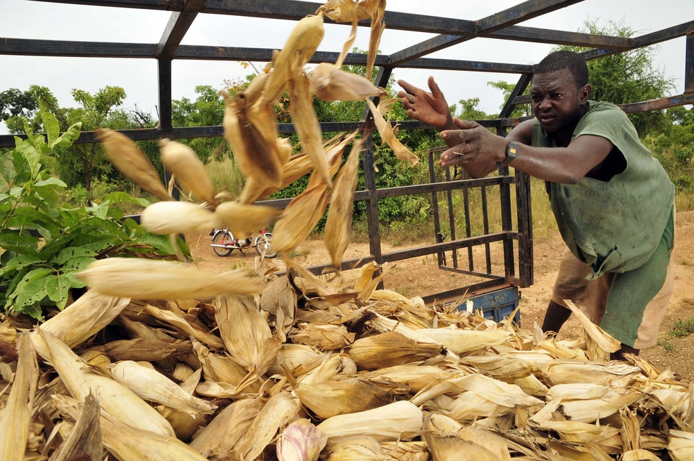 Maize in Ghana's Upper West Region. c. Neil Palmer/CIAT