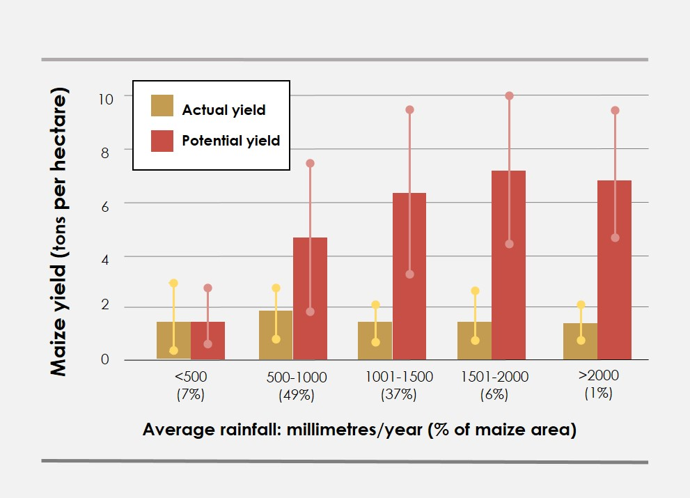 Data source: Actual yield – You et al. 2012; potential yield – author's calculations. Note: Bars indicate the average yield in each annual rainfall category weighted with maize harvest area, and the error bars indicate one standard deviation. Percentages in parentheses indicate the approximate share of maize production area in each rainfall category.