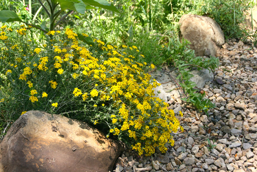 The native garden has over 75 varieties of plants installed in sizes ranging from seed to 15 gallon.