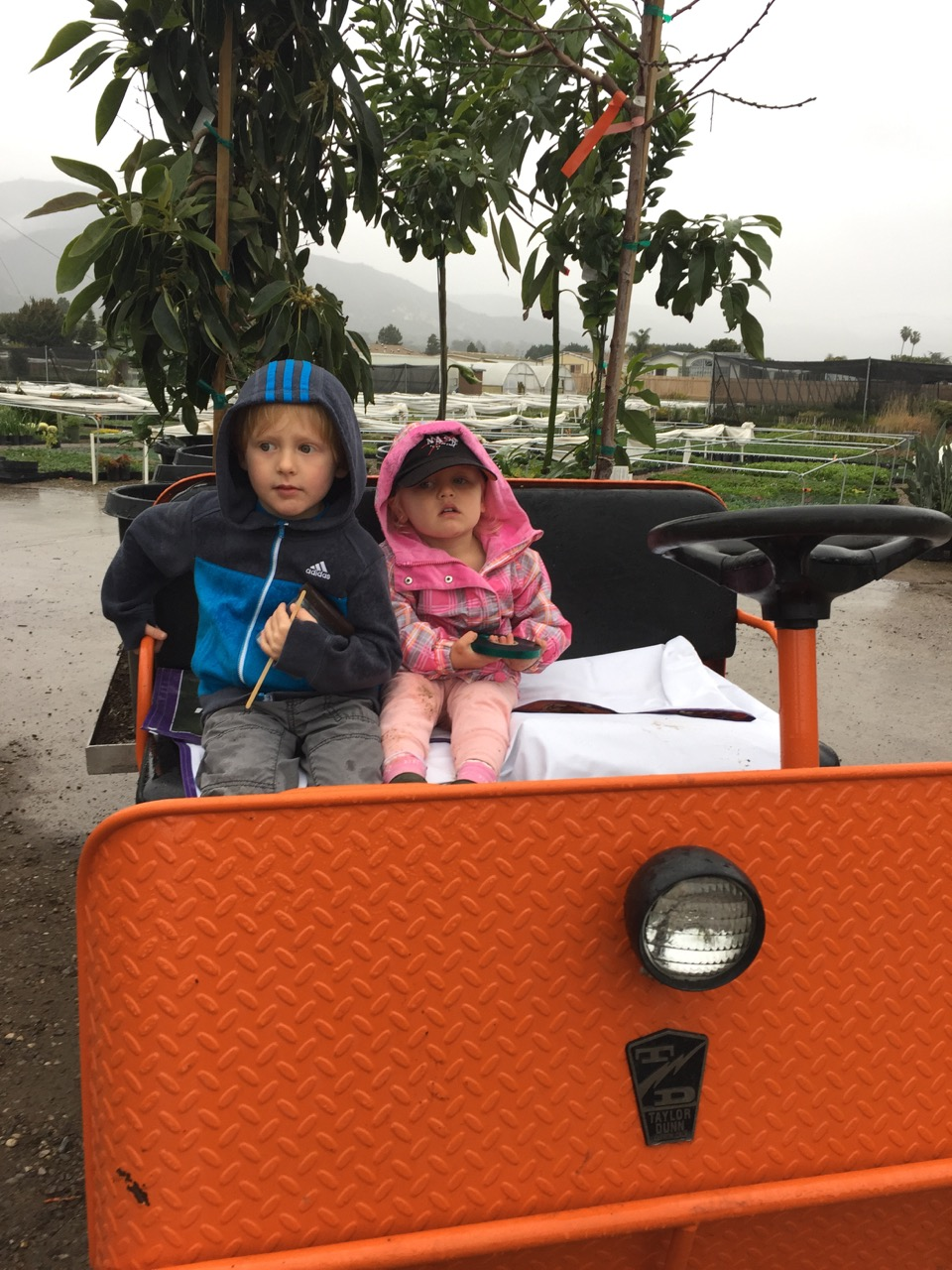 Kiddos enjoying a wet morning with Dad selecting plants for a garden.