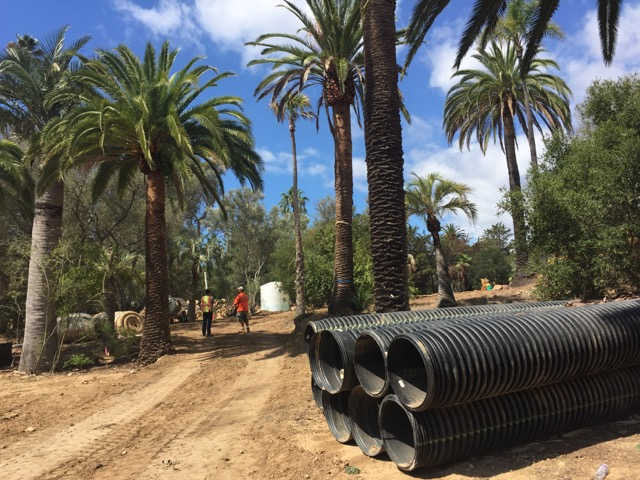 Grading underway on 3 acre parcel with 100+ existing mature palms and olives