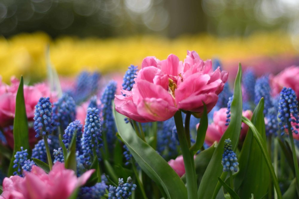 Guerrilla gardening? - Brighten up your marketing with creative thinking