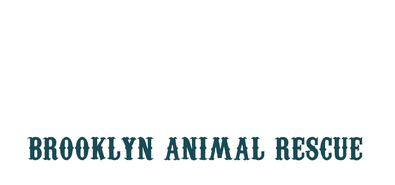 Badass Brooklyn Animal Rescue