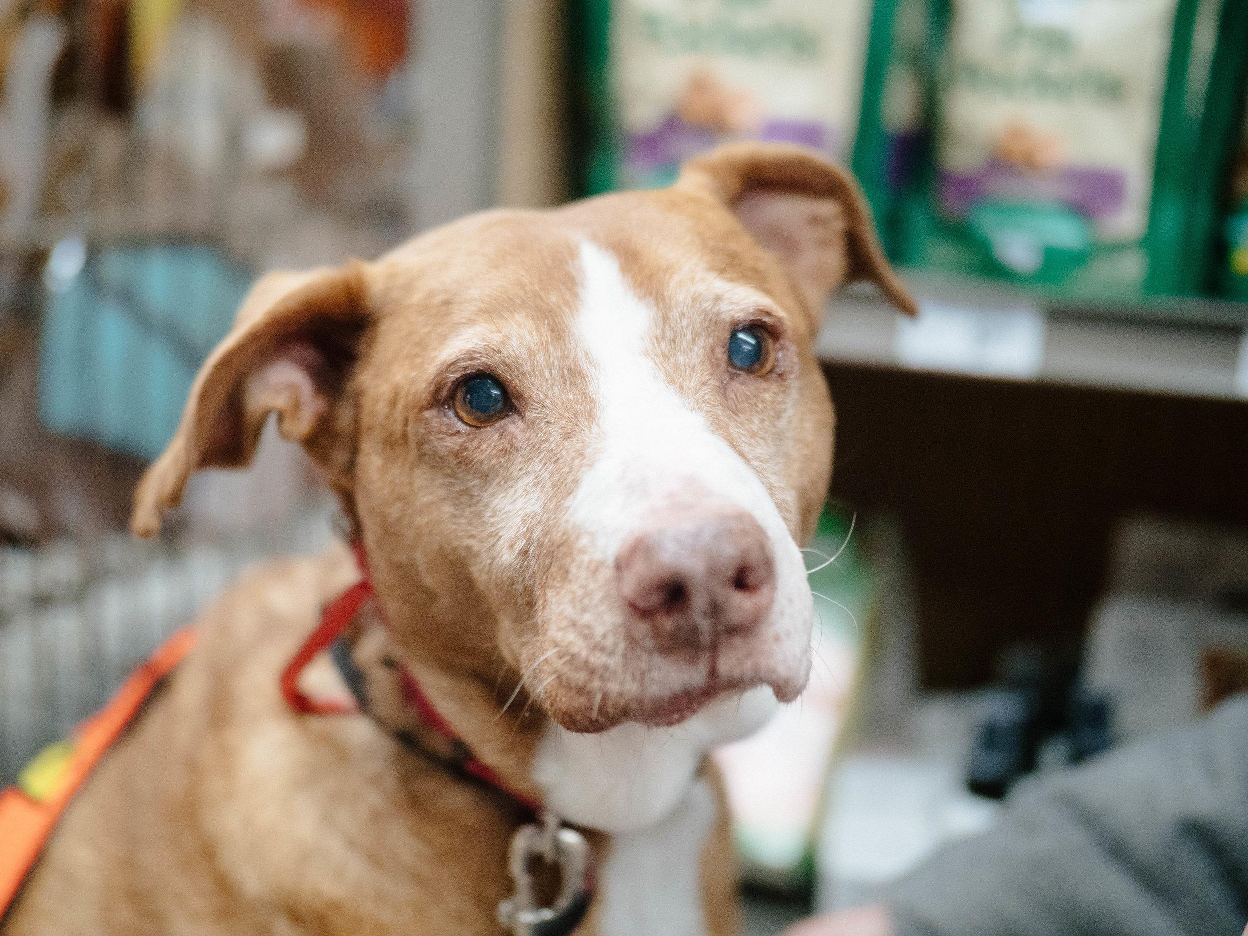Events Badass Brooklyn Animal Rescue
