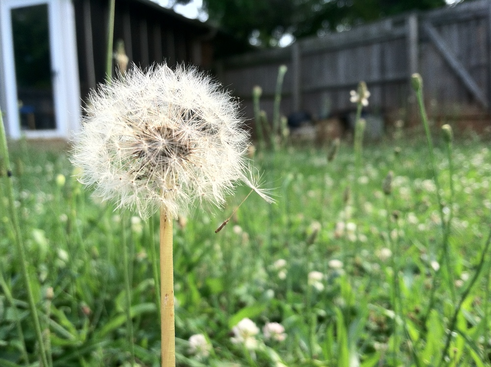 Parachutes & Sneezes