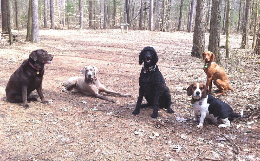 What a cool group of K9 hikers!!!