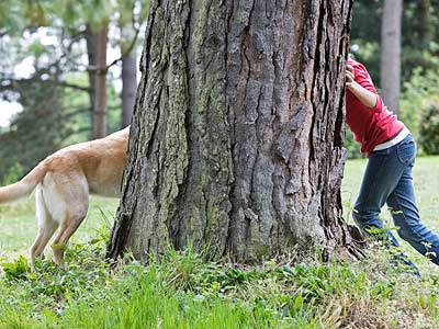 This one might be our favourite. We love playing hide and seek with the dogs on our hikes. Sometimes we play for an hour! One of the best things to do is to hide behind a tree if they keep walking too far ahead during your hike. This will really make them work hard to find you!
