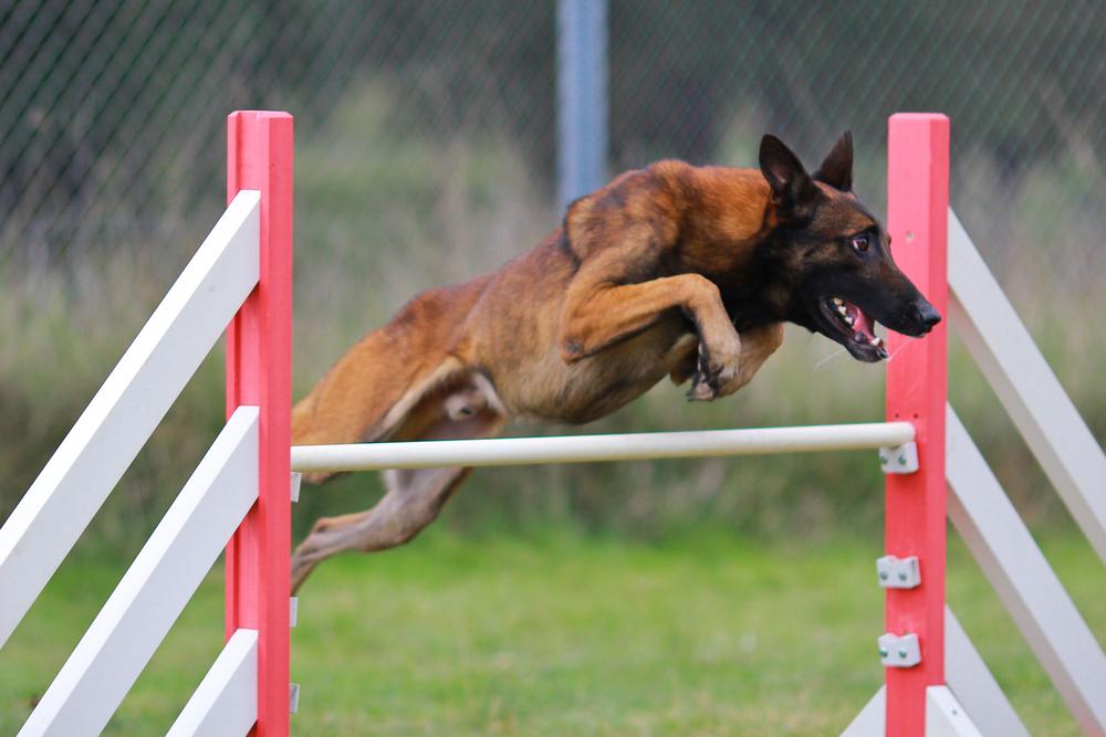 Training and Behaviour Modification