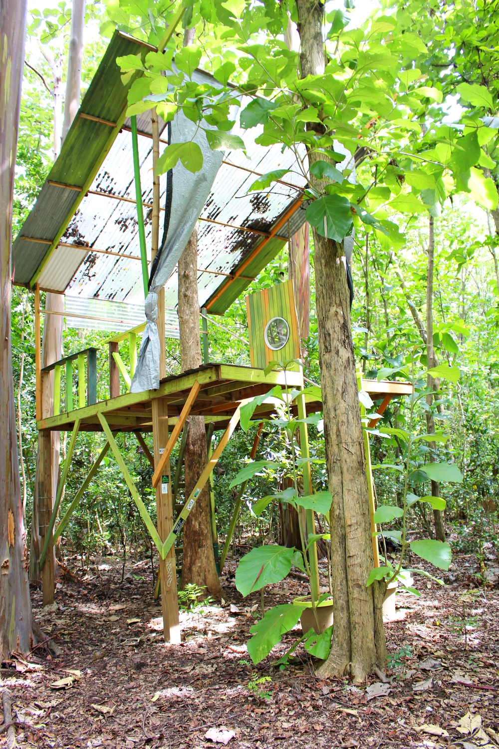 The treehouse in Naguabo built by contemporary artist Juni Figueroa