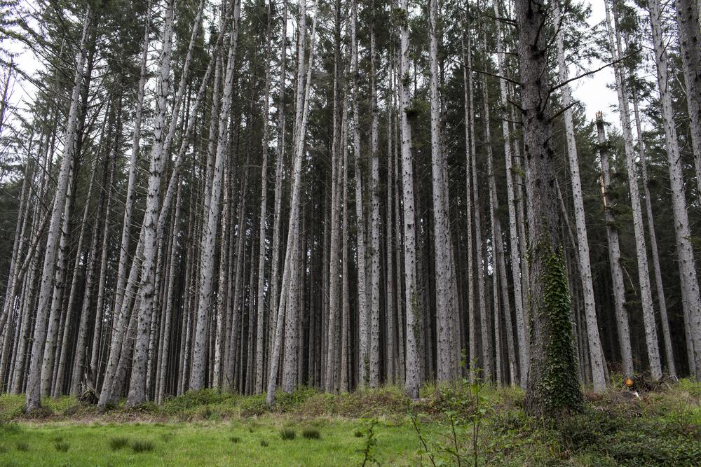 Near Humboldt Lagoon State Park