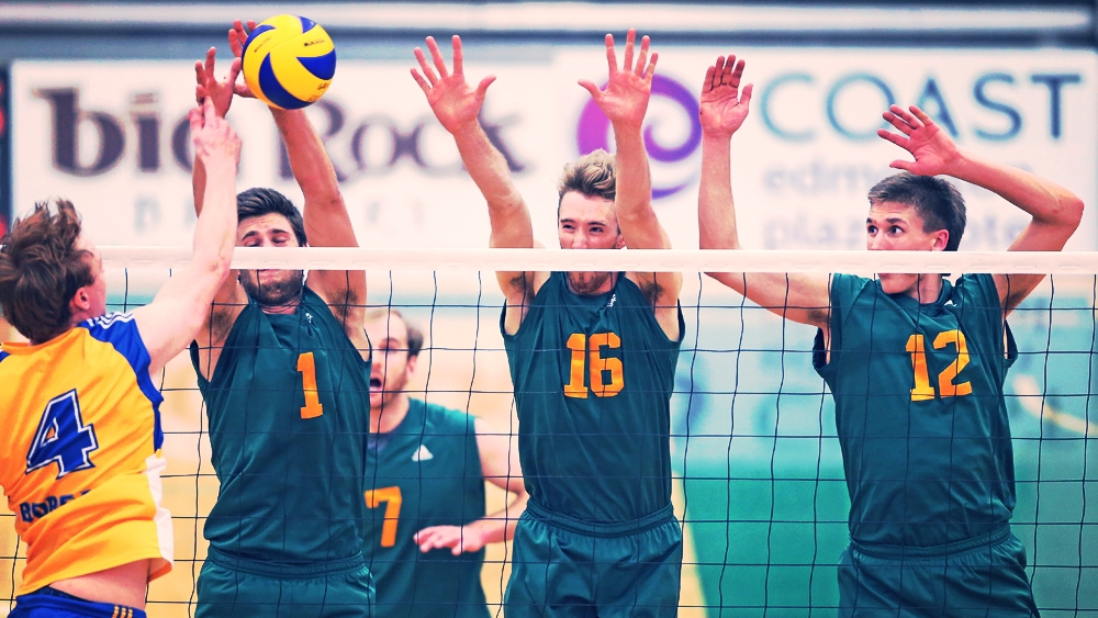 U of A Golden Bears.  Photo: ualberta.ca