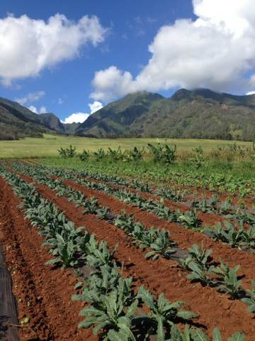 Kumu Farms at Maui Tropical Plantation