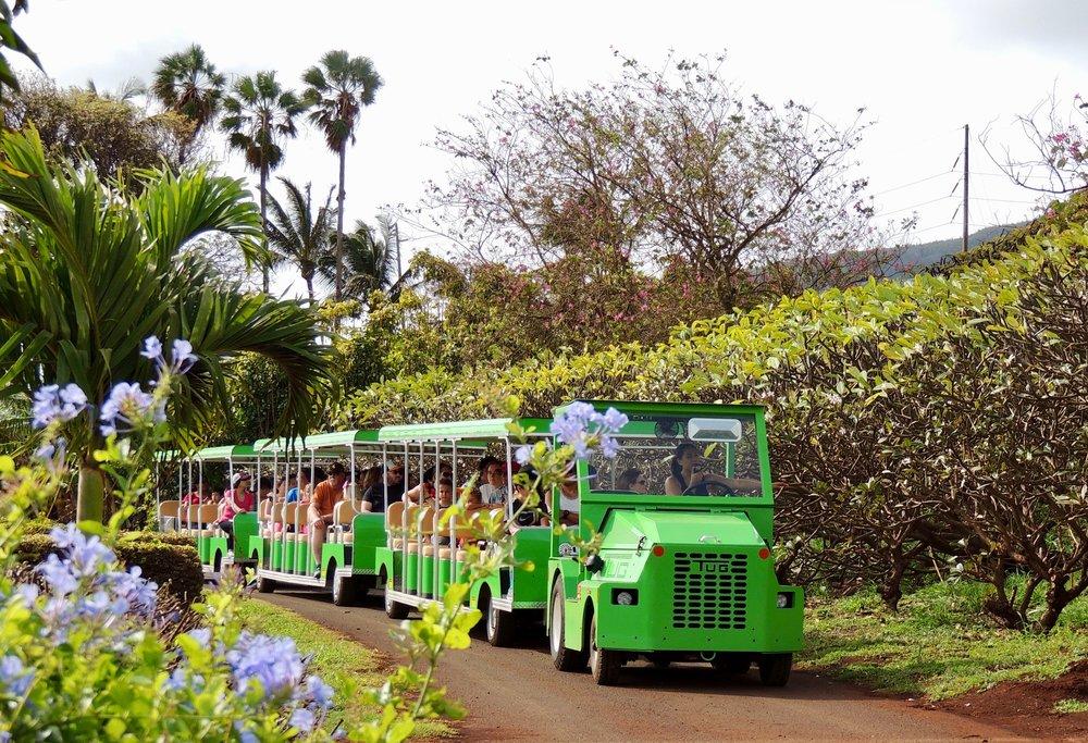 Maui zip line maui tropical plantation autos post for Craigslist maui farm and garden