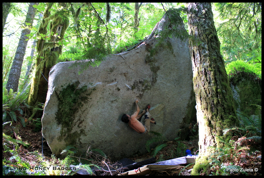 Pablo putting up the Flying Honey Badger-V7