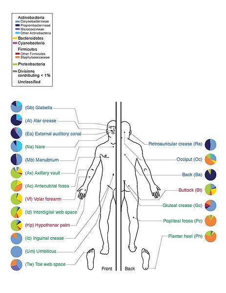 The Skin Microbiome