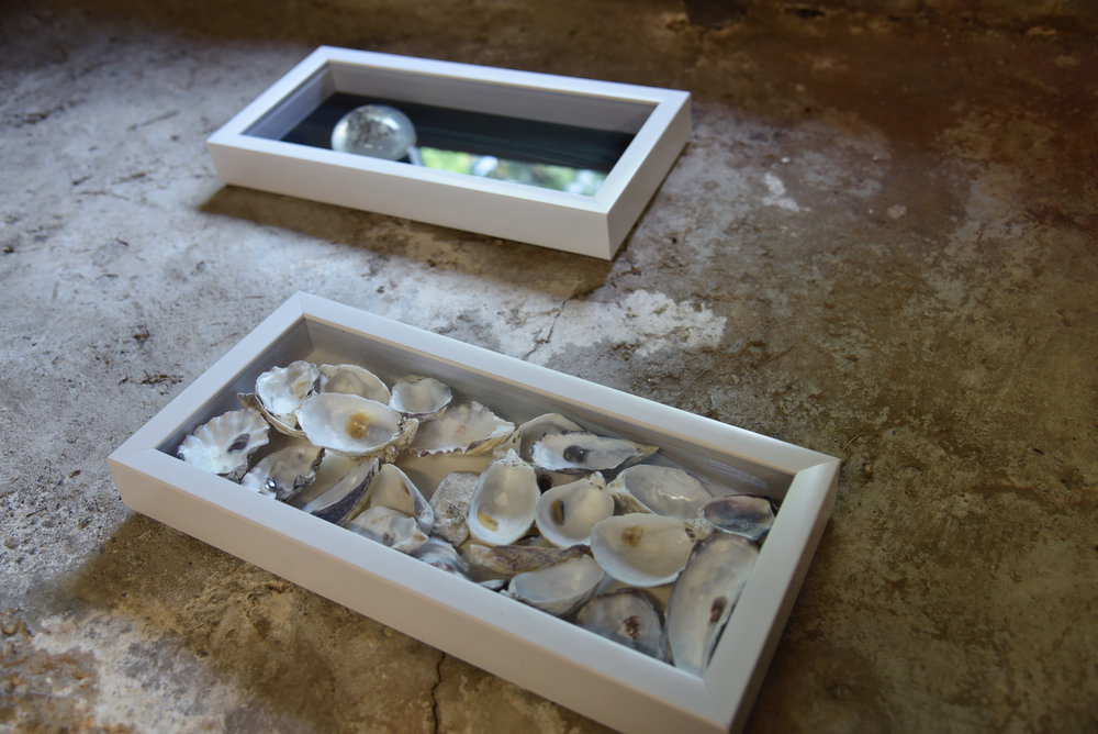 No one will get in but no one will get out.   oyster shells, 2017, 6x10x1""
