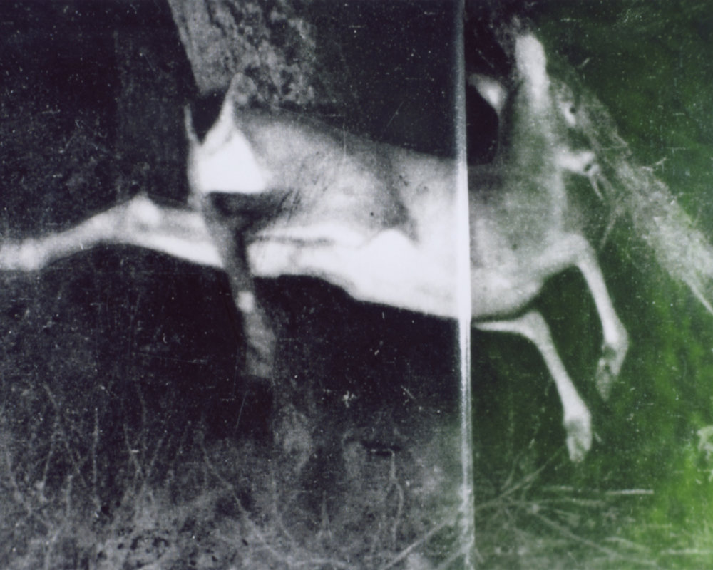 "A wounded deer leaps the highest. (After Dickinson)  Photographic print of Polaroid negative, 2017, 15""x12"" edition of 3   Statement + Info"