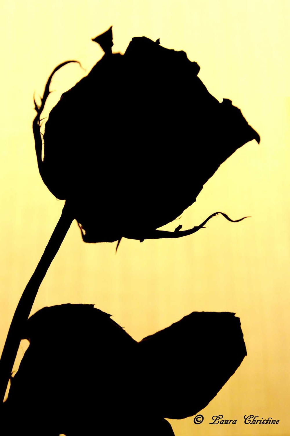 The gallery for --> Simple Rose Silhouette