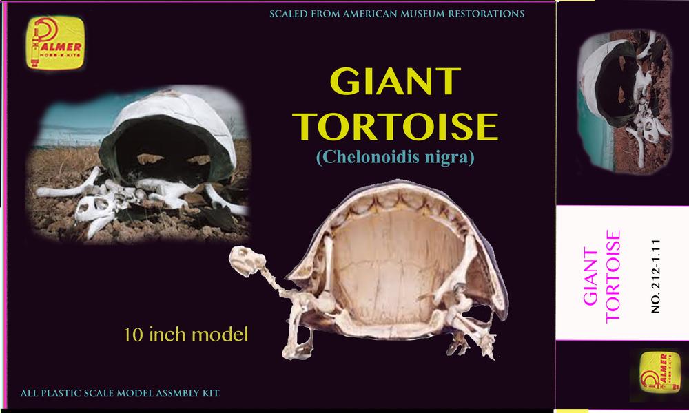 tortoiseboxmodel.jpg