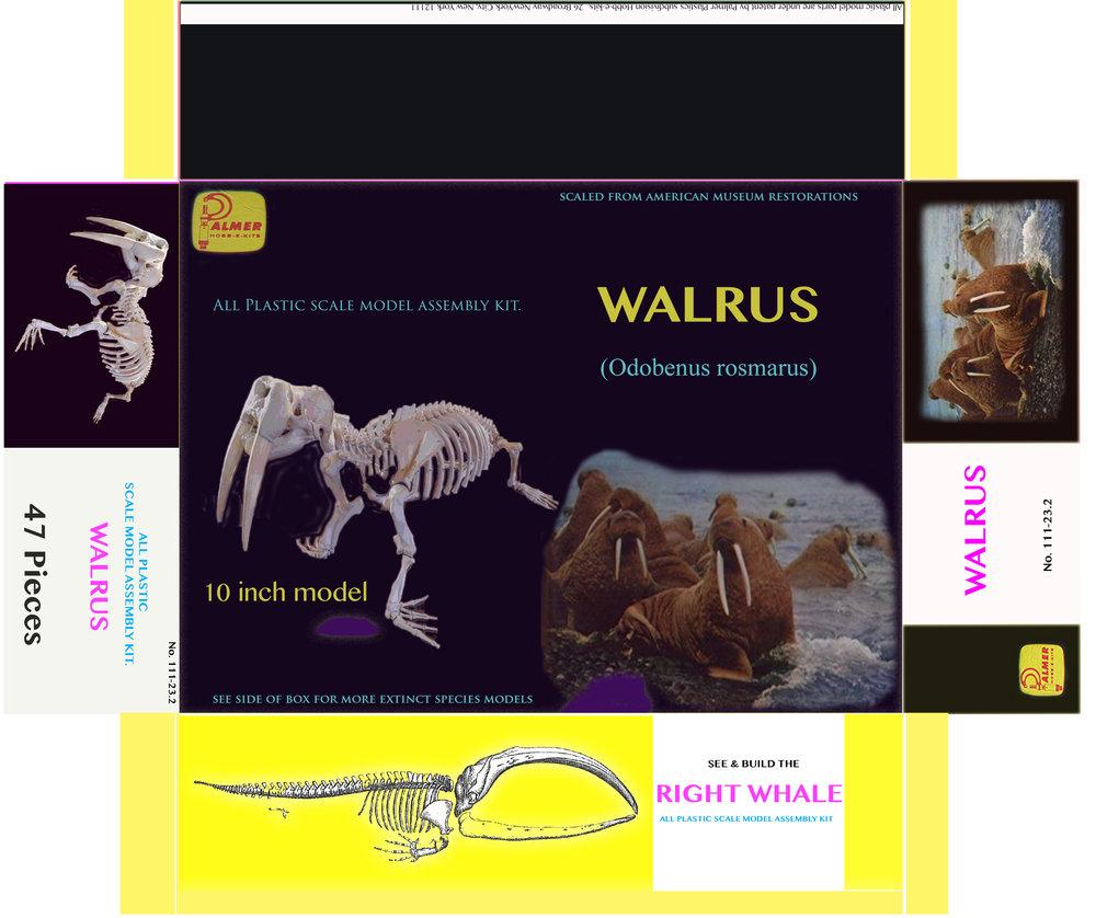 walrusmodelbox.jpg