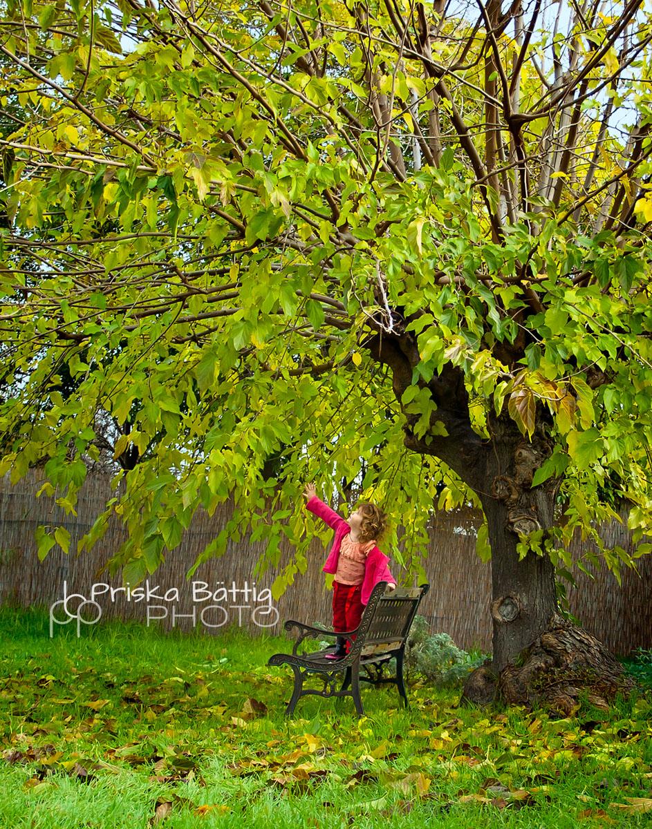 the-tree-Priska BättigPriska Bättig.jpg