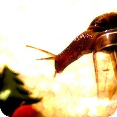 snaily+7.jpg